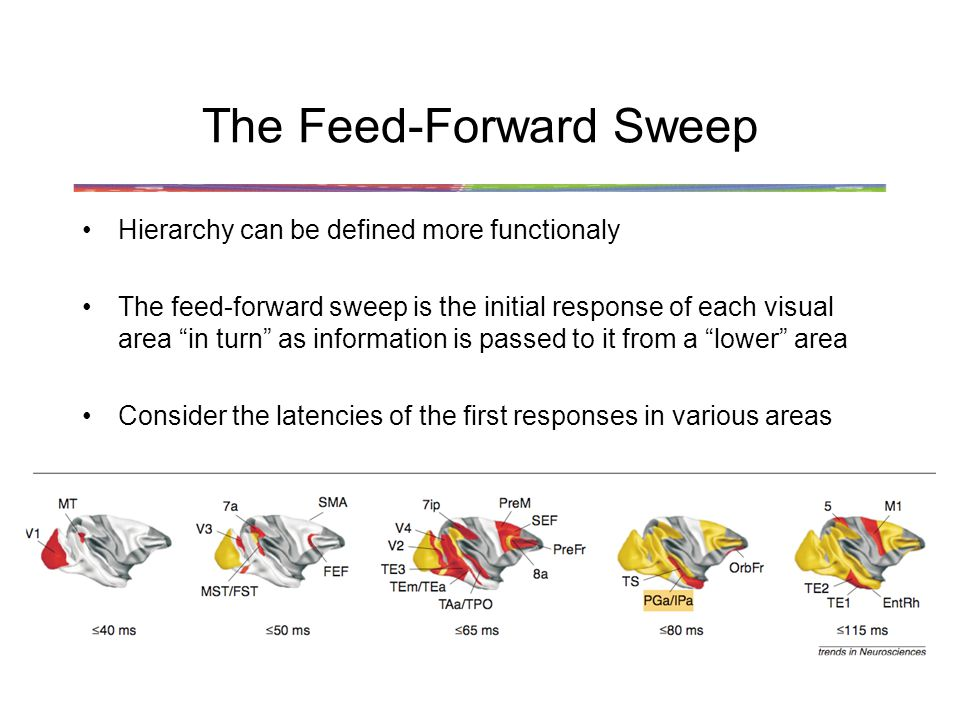 The Feed-Forward Sweep Hierarchy can be defined more functionaly The feed-forward sweep is the initial response of each visual area in turn as information is passed to it from a lower area Consider the latencies of the first responses in various areas