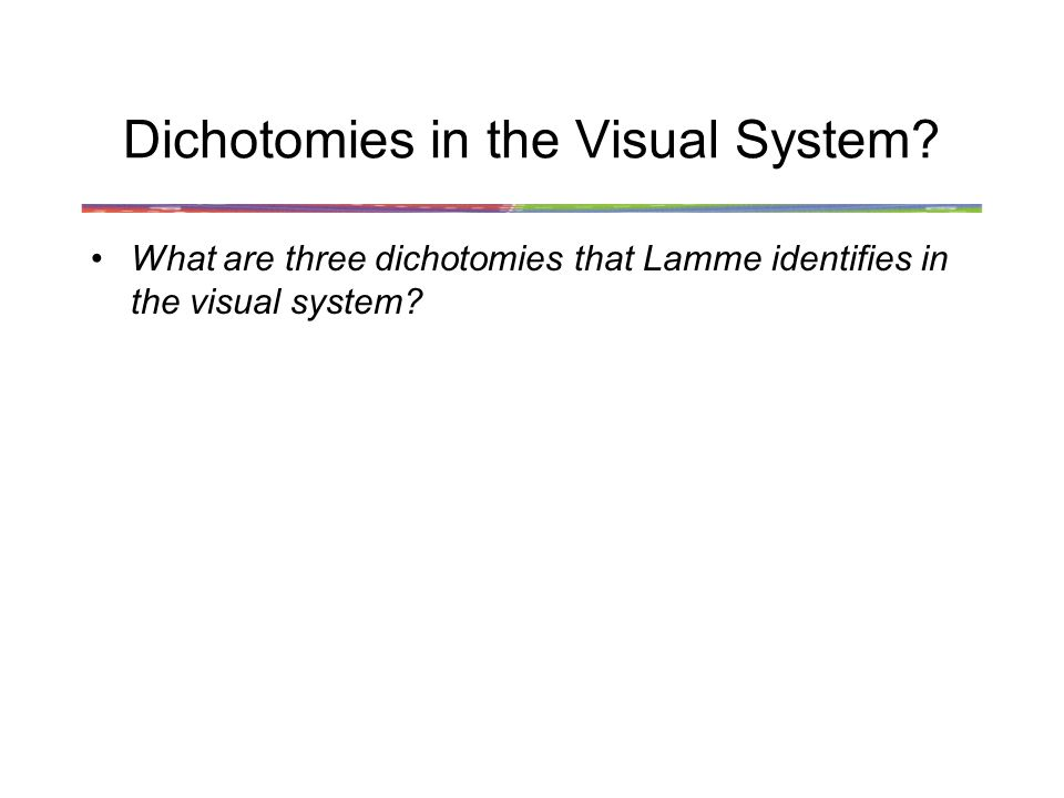 Dichotomies in the Visual System.