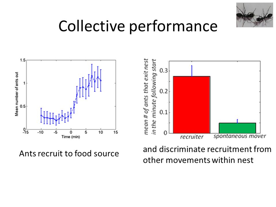 Collective performance Ants recruit to food source and discriminate recruitment from other movements within nest
