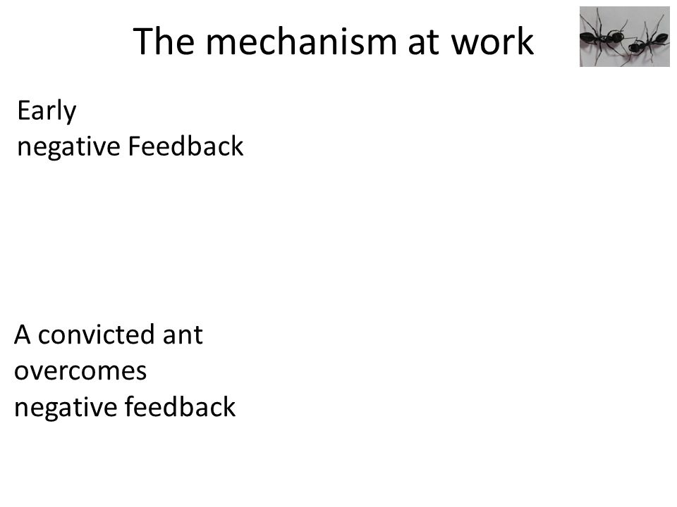 The mechanism at work Early negative Feedback A convicted ant overcomes negative feedback