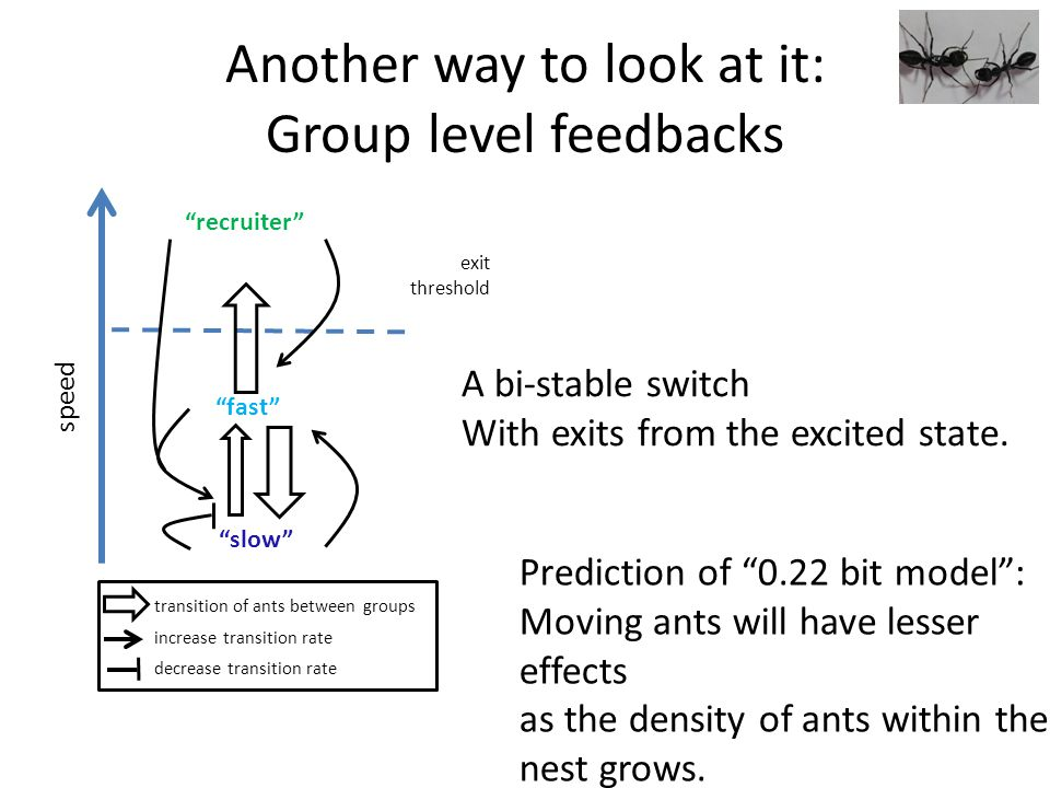 Another way to look at it: Group level feedbacks speed recruiter fast slow exit threshold increase transition rate decrease transition rate transition of ants between groups A bi-stable switch With exits from the excited state.