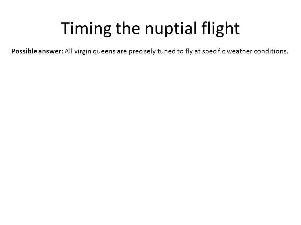 Timing the nuptial flight Possible answer: All virgin queens are precisely tuned to fly at specific weather conditions.