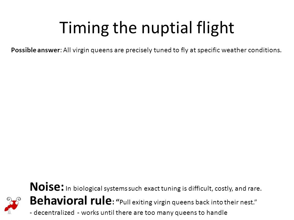Timing the nuptial flight Negative + positive feedback: a collective mechanism for noise suppression.