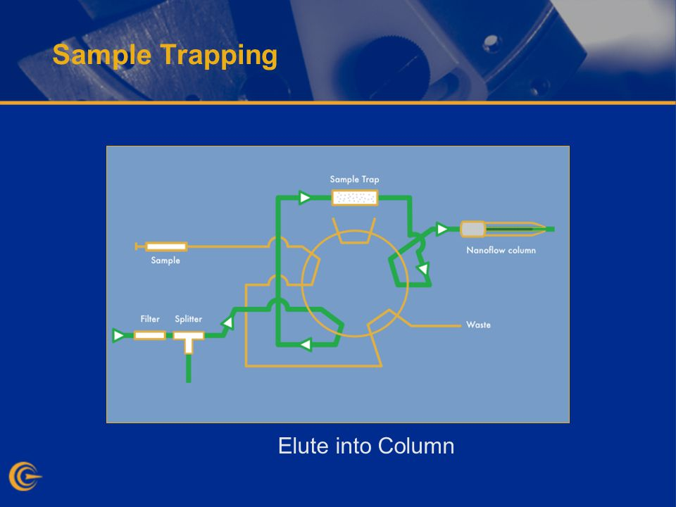 Sample Trapping Elute into Column