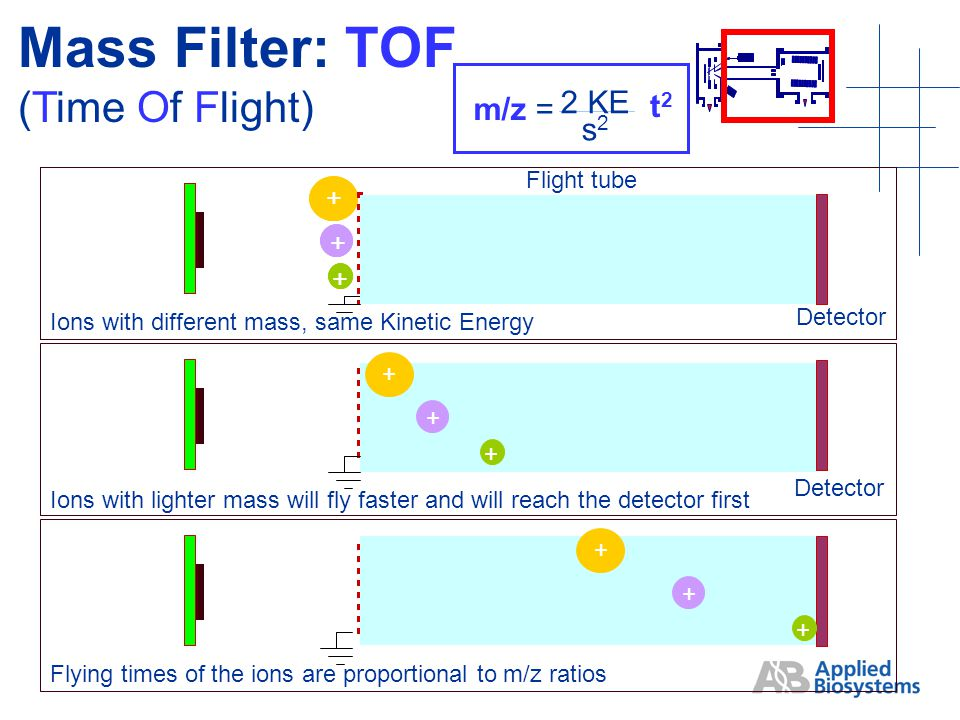 Ions with different mass, same Kinetic Energy + + + Detector + + + Flight tube Ions with lighter mass will fly faster and will reach the detector first Detector + + + Flying times of the ions are proportional to m/z ratios + + + Mass Filter: TOF (Time Of Flight) m/z = 2 KE s2s2 t2t2