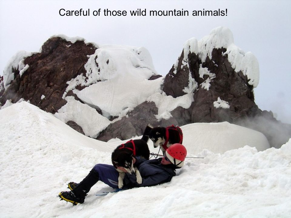 Careful of those wild mountain animals!