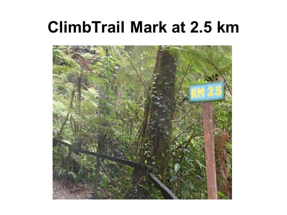 ClimbTrail Mark at 2.5 km