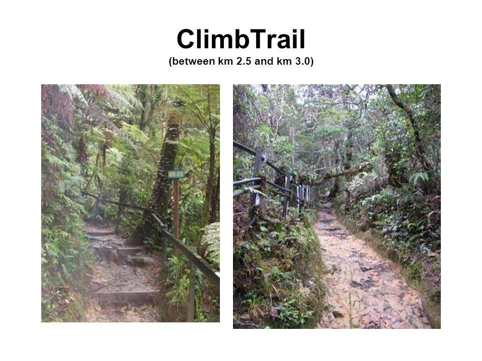 ClimbTrail (between km 2.5 and km 3.0)