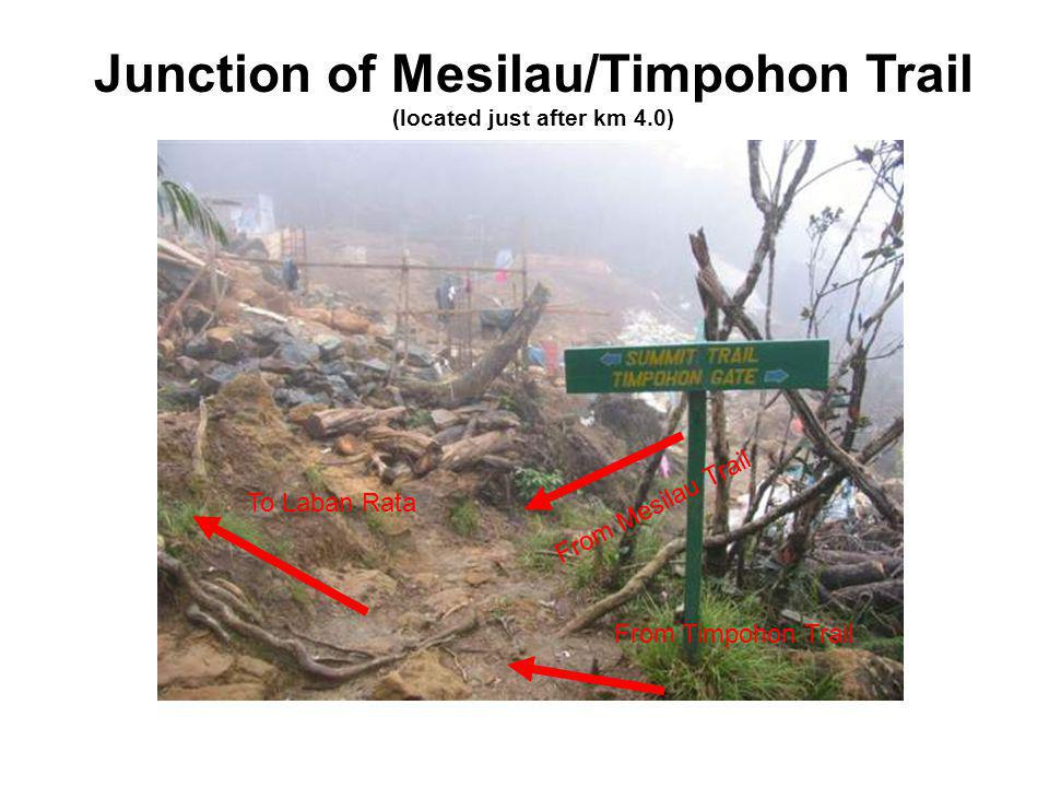 Junction of Mesilau/Timpohon Trail (located just after km 4.0) From Timpohon Trail From Mesilau Trail To Laban Rata