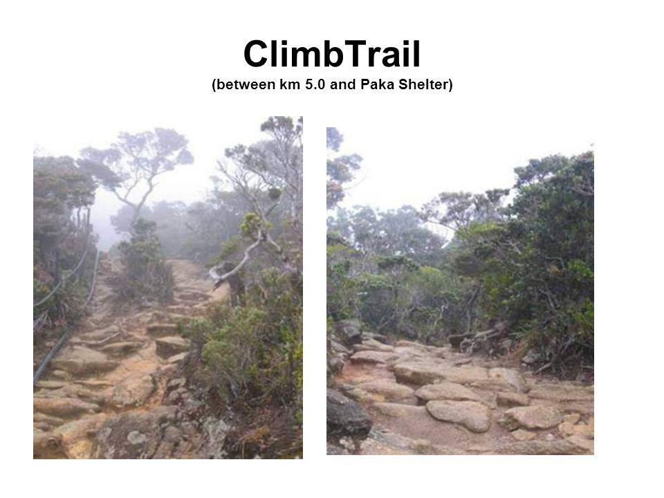 ClimbTrail (between km 5.0 and Paka Shelter)
