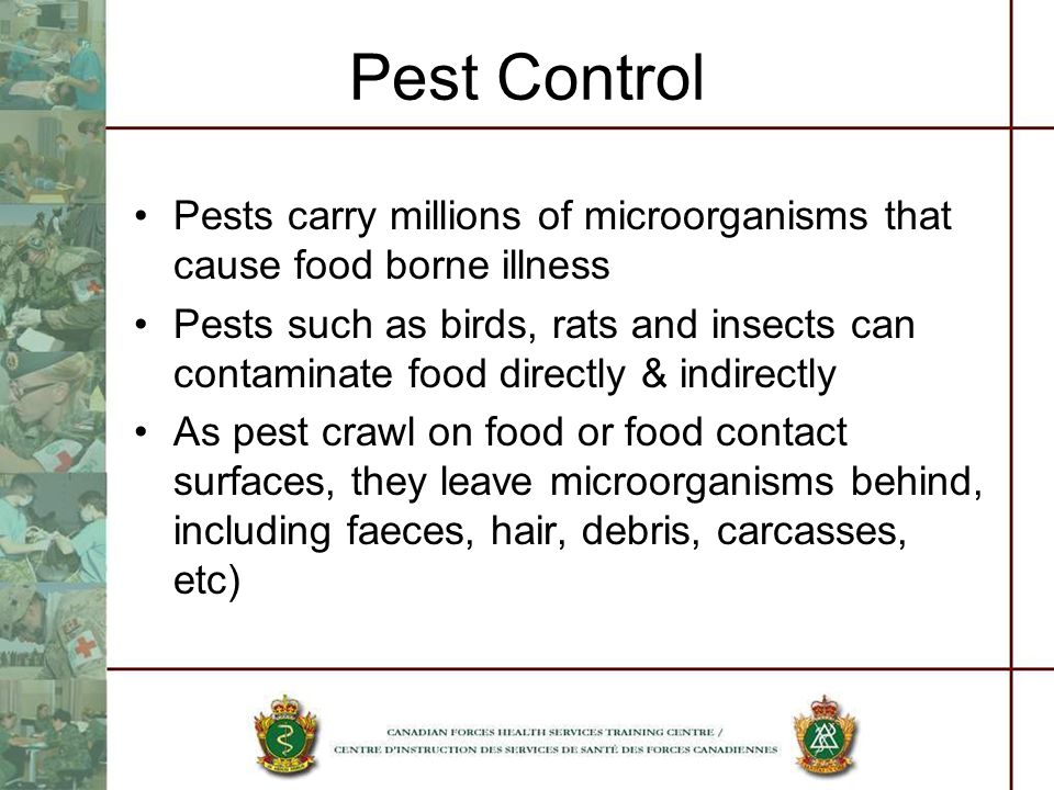 Pest Control Pests carry millions of microorganisms that cause food borne illness Pests such as birds, rats and insects can contaminate food directly & indirectly As pest crawl on food or food contact surfaces, they leave microorganisms behind, including faeces, hair, debris, carcasses, etc)
