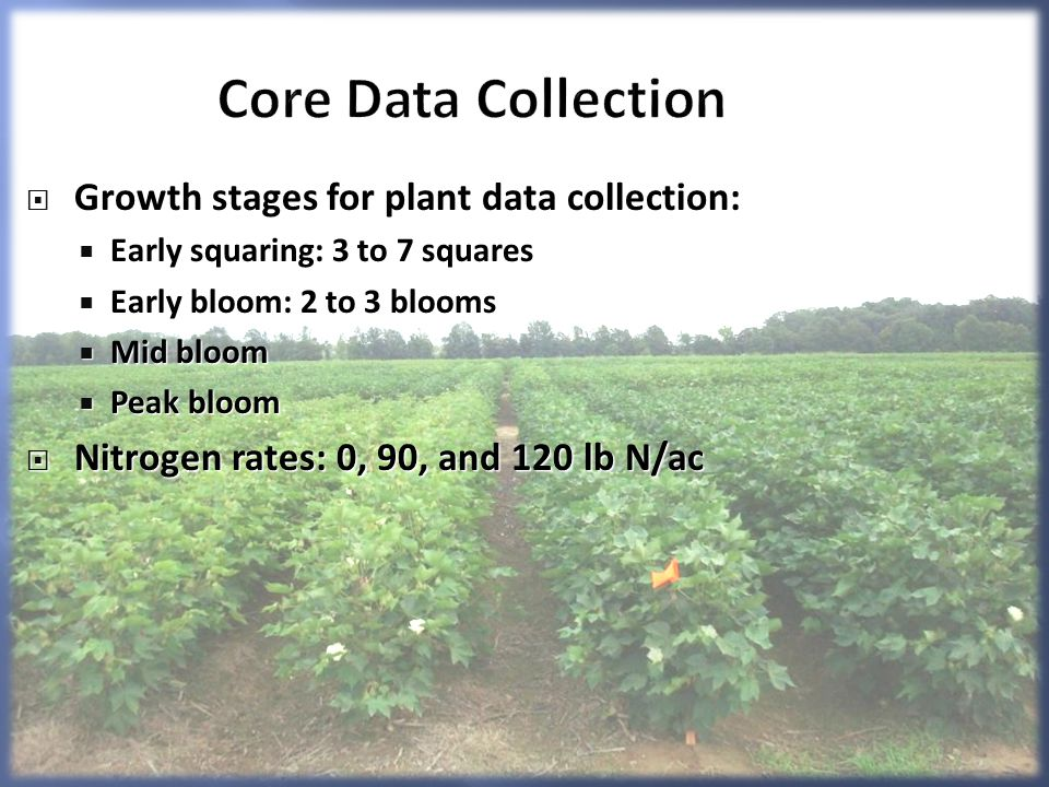 Core Data Collection Growth stages for plant data collection: Growth stages for plant data collection: Early squaring: 3 to 7 squares Early squaring: 3 to 7 squares Early bloom: 2 to 3 blooms Early bloom: 2 to 3 blooms Mid bloom Mid bloom Peak bloom Peak bloom Nitrogen rates: 0, 90, and 120 lb N/ac Nitrogen rates: 0, 90, and 120 lb N/ac