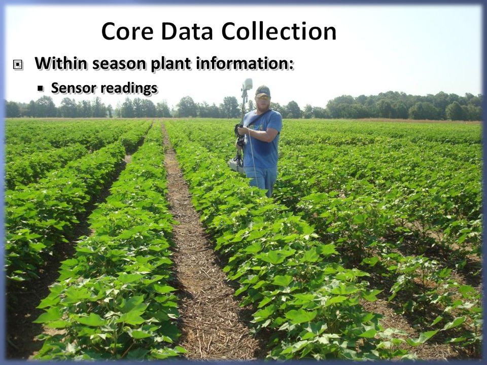 Core Data Collection Within season plant information: Within season plant information: Sensor readings Sensor readings Within season plant information: Within season plant information: Sensor readings Sensor readings