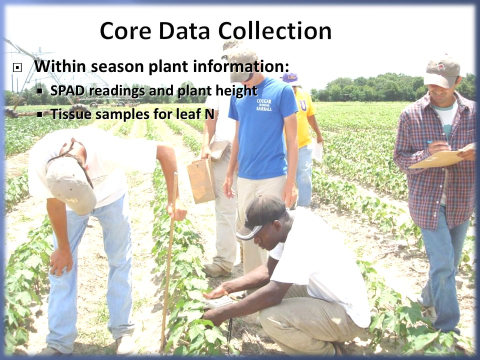 Core Data Collection Within season plant information: Within season plant information: SPAD readings and plant height SPAD readings and plant height Tissue samples for leaf N Tissue samples for leaf N