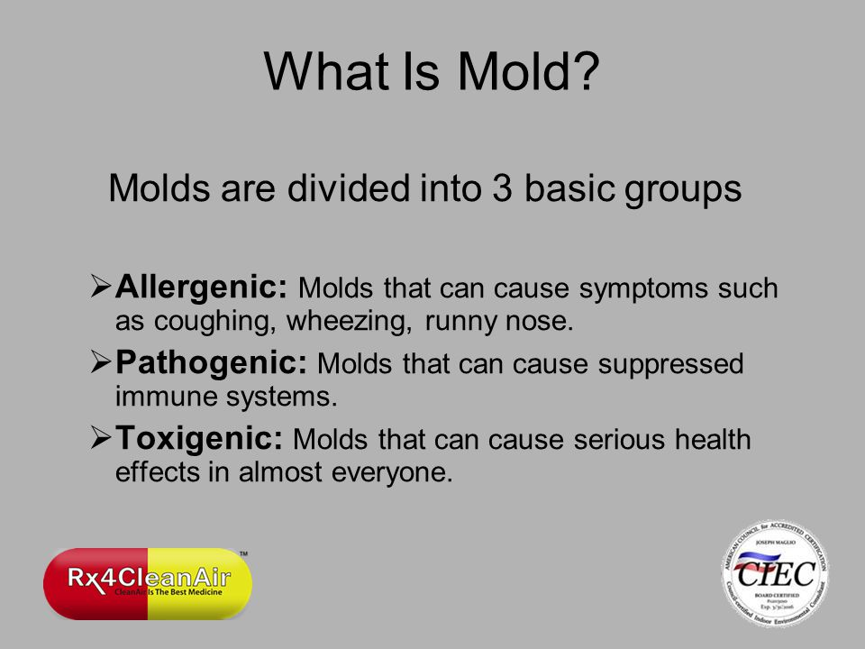 What Is Mold.