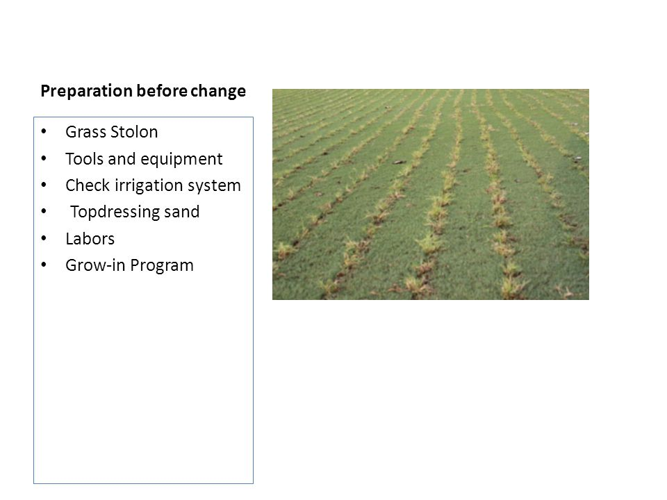 Preparation before change Grass Stolon Tools and equipment Check irrigation system Topdressing sand Labors Grow-in Program