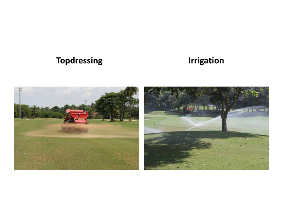 TopdressingIrrigation