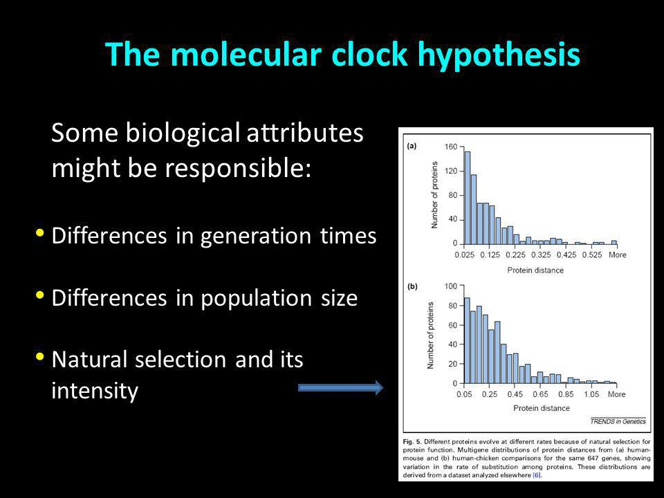 The molecular clock hypothesis Constant Differences in generation times Differences in population size Natural selection and its intensity Some biological attributes might be responsible: