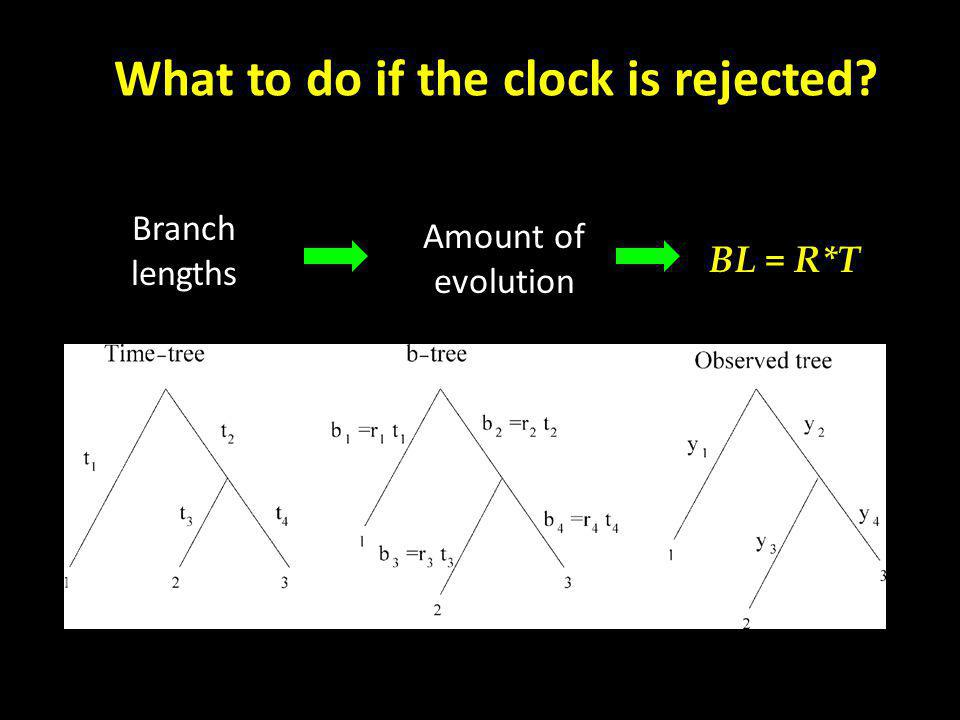 Amount of evolution BL = R*T What to do if the clock is rejected Branch lengths