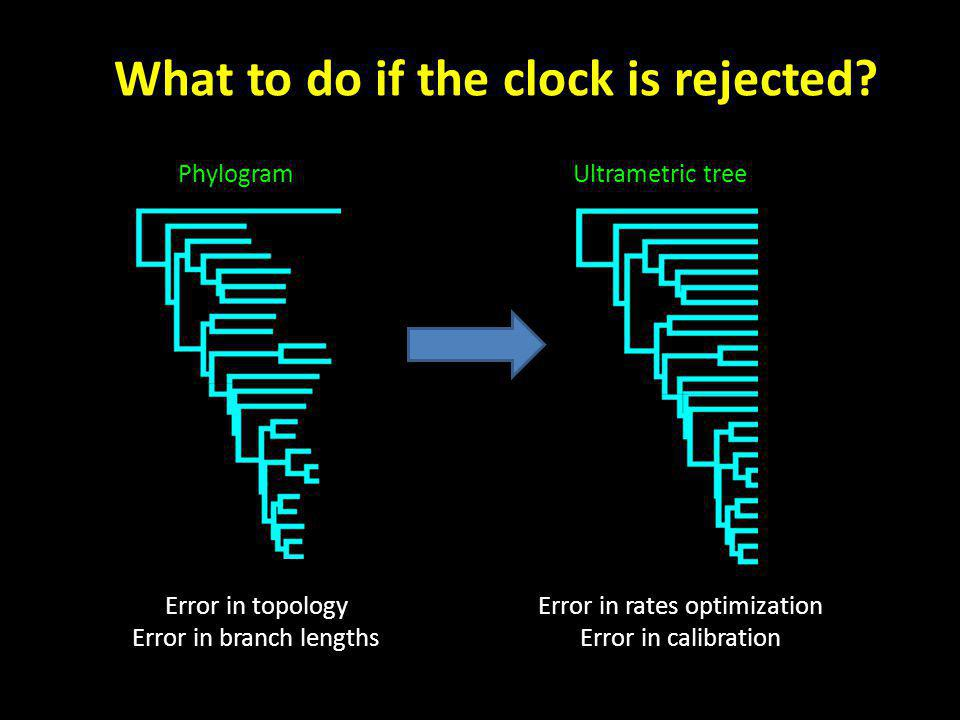 Error in topology Error in branch lengths Error in rates optimization Error in calibration PhylogramUltrametric tree What to do if the clock is rejected