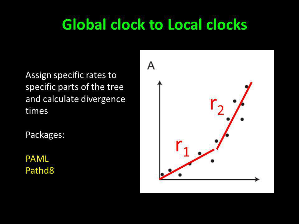 Global clock to Local clocks Assign specific rates to specific parts of the tree and calculate divergence times Packages: PAML Pathd8 r1r1 r2r2
