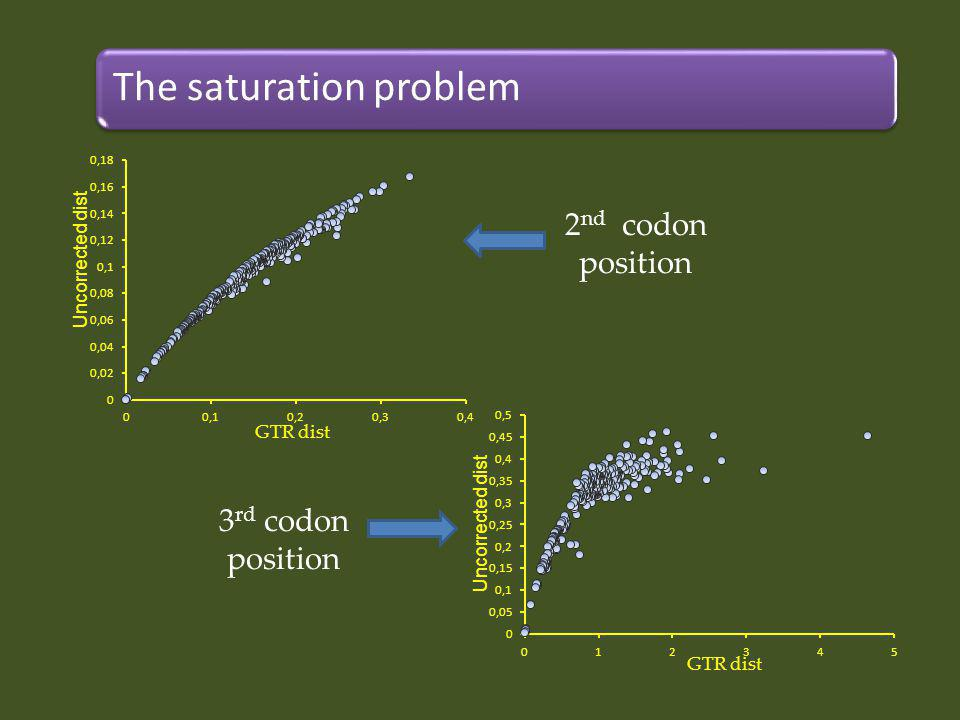 The saturation problem 2 nd codon position 3 rd codon position GTR dist Uncorrected dist