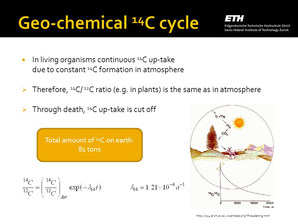In living organisms continuous 14 C up-take due to constant 14 C formation in atmosphere Therefore, 14 C/ 12 C ratio (e.g.