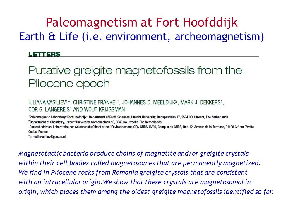Magnetotactic bacteria produce chains of magnetite and/or greigite crystals within their cell bodies called magnetosomes that are permanently magnetized.