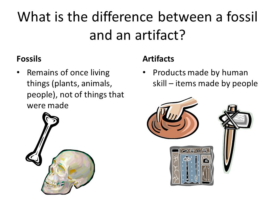 What is the difference between a fossil and an artifact.