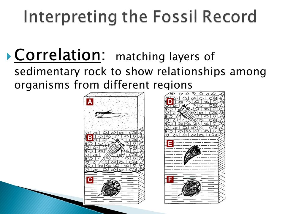 fossils that permit the relative dating of rocks within a narrow time span Example: trilobites