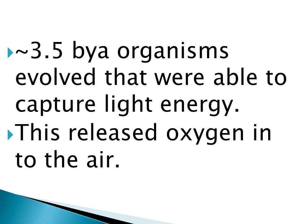 no free O 2 the first organisms-- anaerobic respiration. It increased level of CO 2