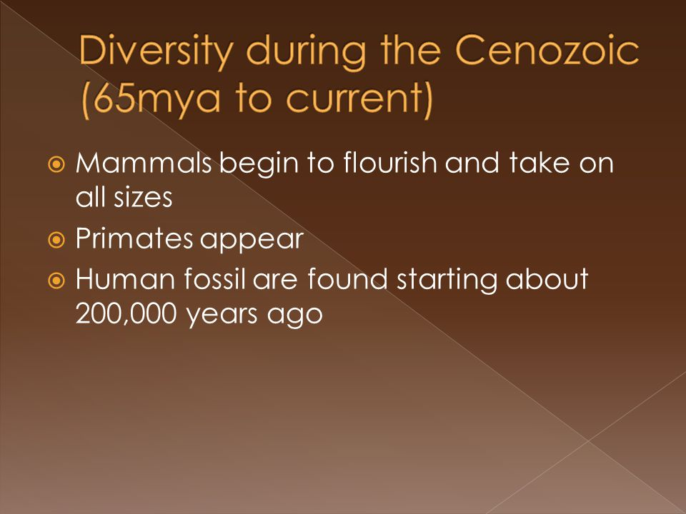 Mammals begin to flourish and take on all sizes Primates appear Human fossil are found starting about 200,000 years ago