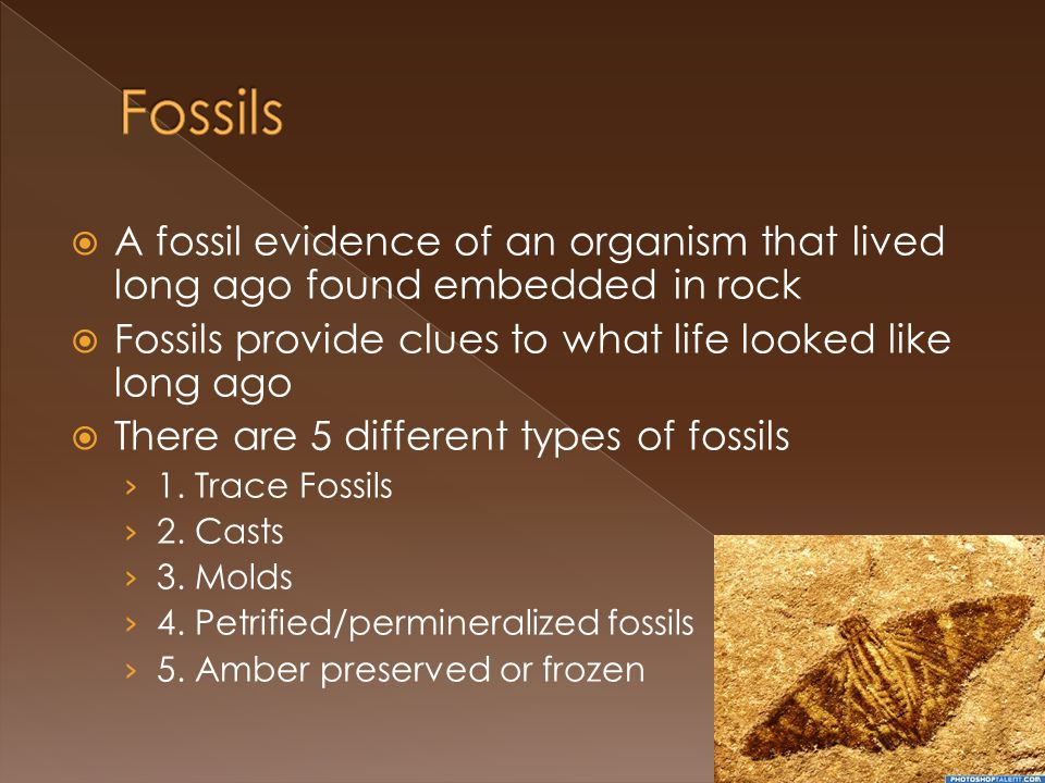 A fossil evidence of an organism that lived long ago found embedded in rock Fossils provide clues to what life looked like long ago There are 5 different types of fossils 1.