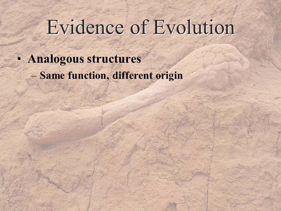 Evidence of Evolution Analogous structures –Same function, different origin