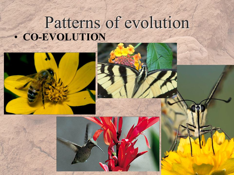 Patterns of evolution CO-EVOLUTION