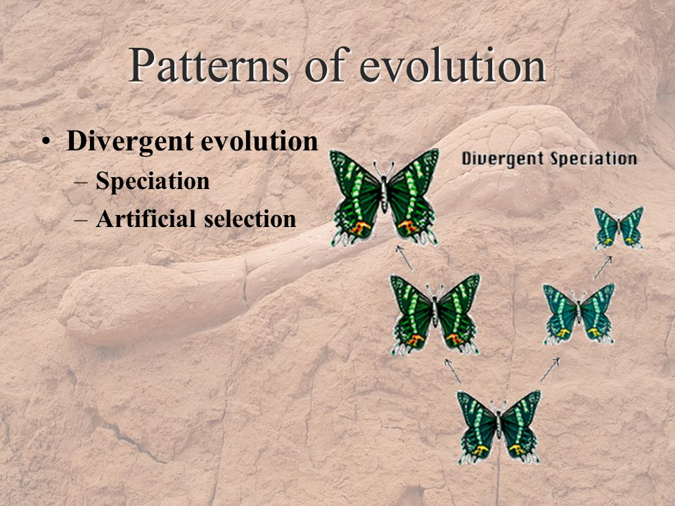 Patterns of evolution Divergent evolution –Speciation –Artificial selection