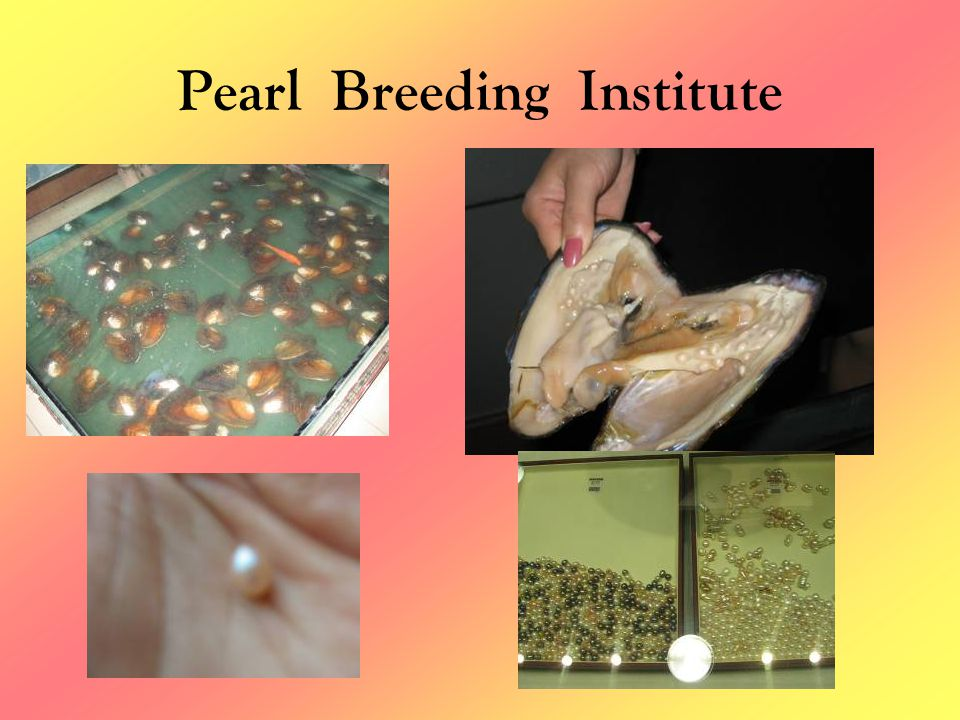 Pearl Breeding Institute