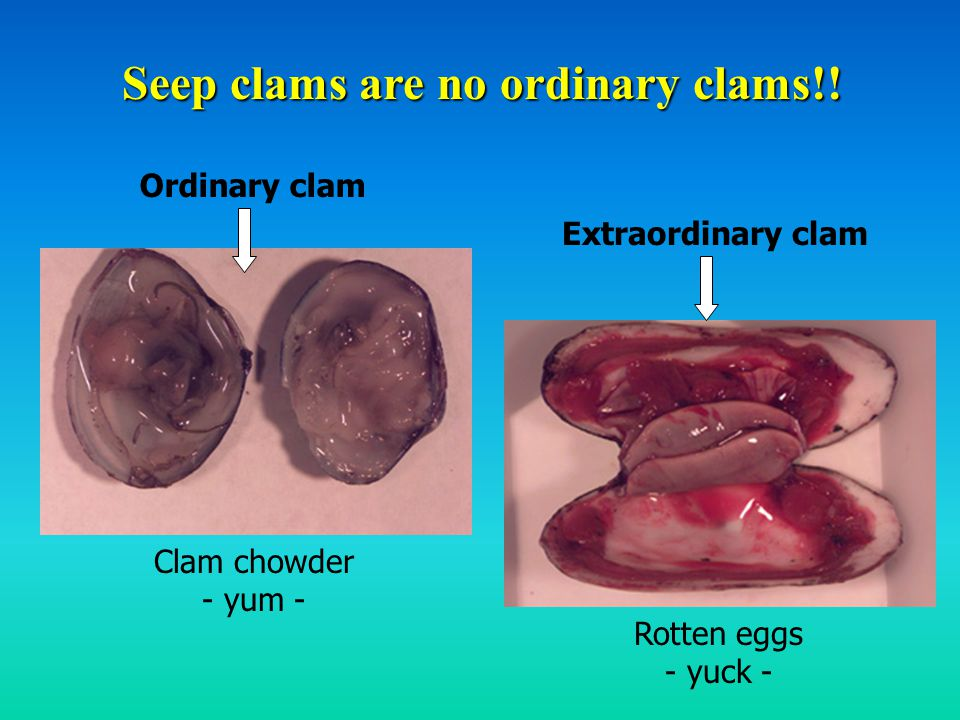 Seep clams are no ordinary clams!.
