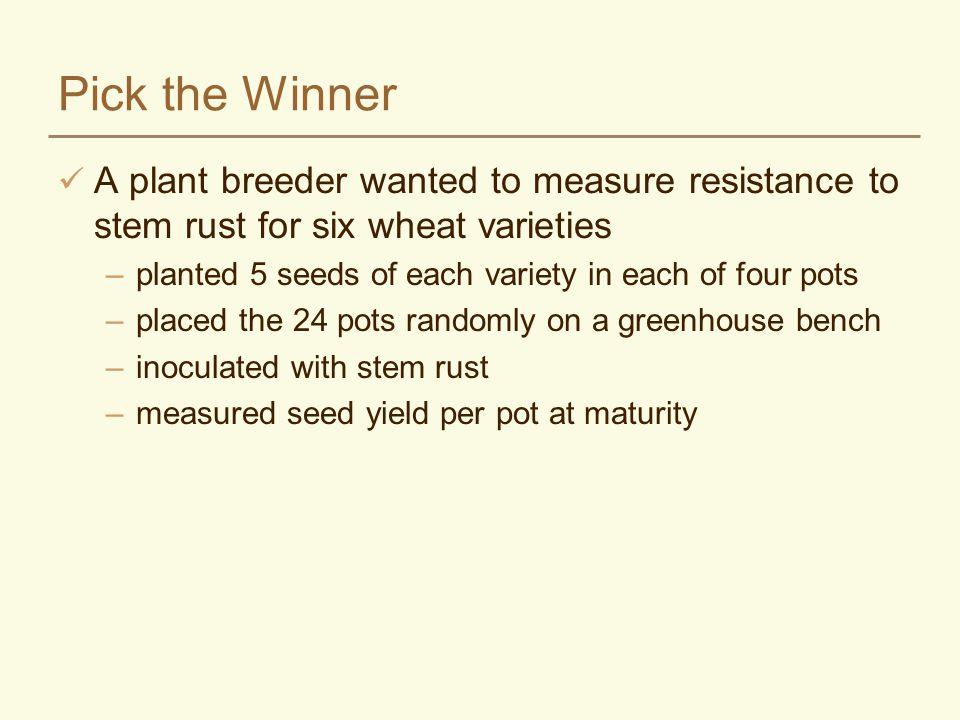 Pick the Winner A plant breeder wanted to measure resistance to stem rust for six wheat varieties –planted 5 seeds of each variety in each of four pots –placed the 24 pots randomly on a greenhouse bench –inoculated with stem rust –measured seed yield per pot at maturity