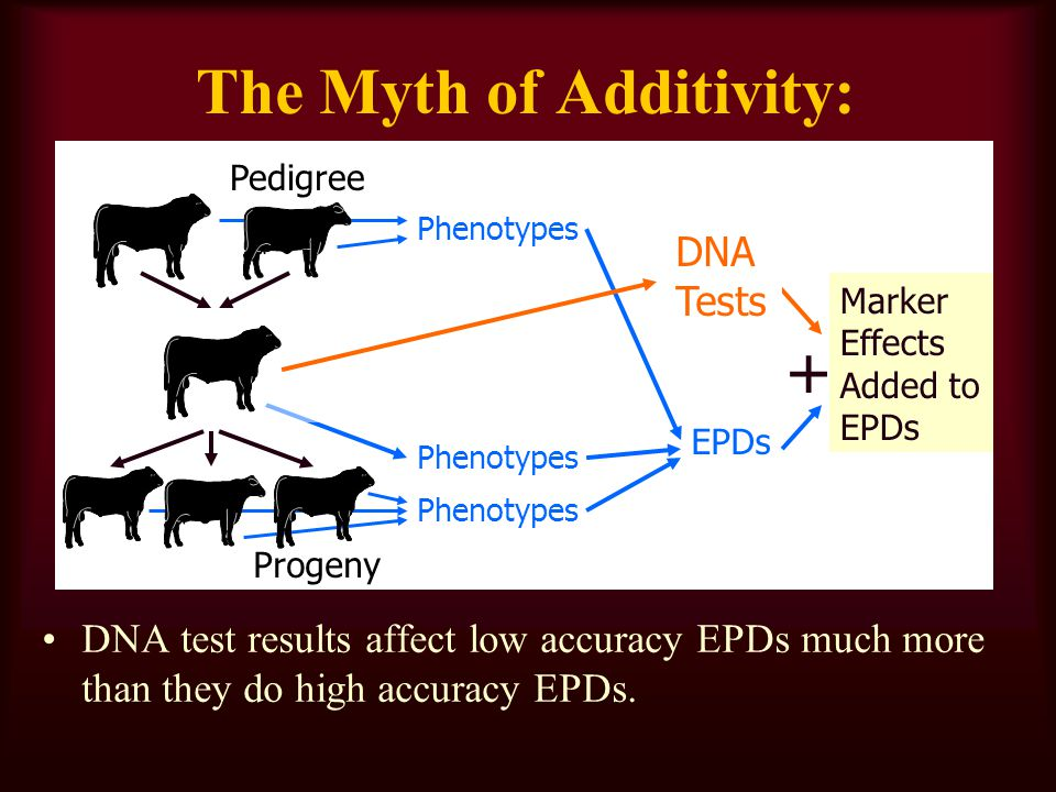The Myth of Additivity: Pedigree Phenotypes Progeny EPDs DNA test results affect low accuracy EPDs much more than they do high accuracy EPDs.