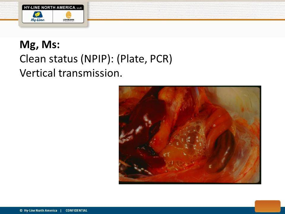Mg, Ms: Clean status (NPIP): (Plate, PCR) Vertical transmission.
