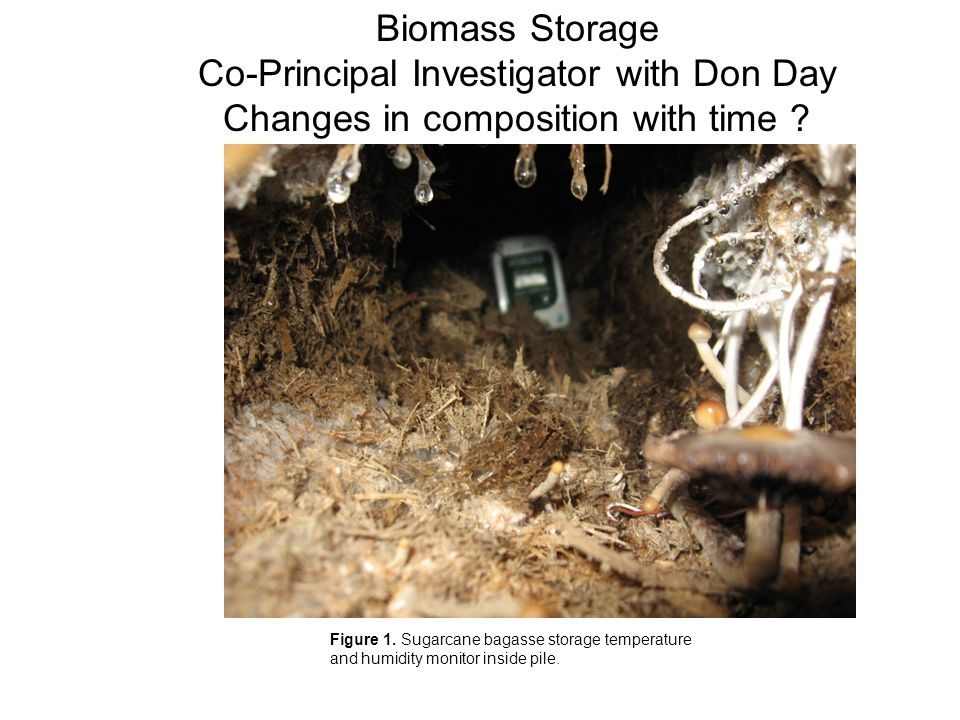 Figure 1. Sugarcane bagasse storage temperature and humidity monitor inside pile.