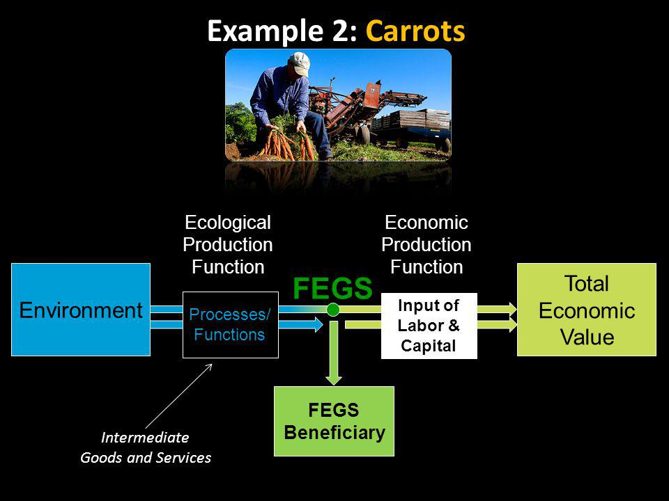 Ecological Production Function FEGS Processes/ Functions Input of Labor & Capital Environment Total Economic Value FEGS Beneficiary Economic Production Function Intermediate Goods and Services Example 2: Carrots