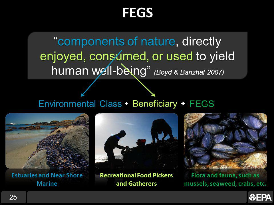 FEGS 25 components of nature, directly enjoyed, consumed, or used to yield human well-being (Boyd & Banzhaf 2007)components of nature, directly enjoyed, consumed, or used to yield human well-being (Boyd & Banzhaf 2007) Environmental Class Beneficiary + FEGS Estuaries and Near Shore Marine Recreational Food Pickers and Gatherers Flora and fauna, such as mussels, seaweed, crabs, etc.