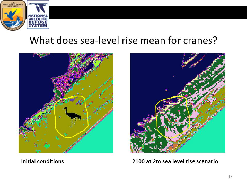 U.S. Fish & Wildlife Service What does sea-level rise mean for cranes.