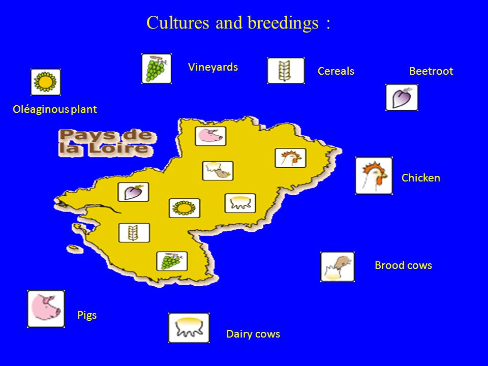 Cultures and breedings : Chicken Brood cows Dairy cows Pigs Oléaginous plant Vineyards CerealsBeetroot