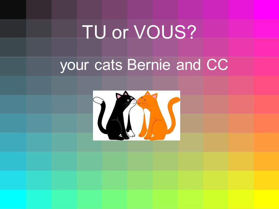 TU or VOUS your cats Bernie and CC