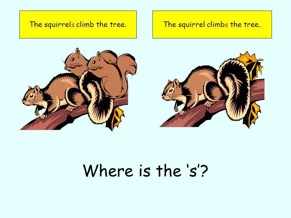The squirrels climb the tree.The squirrel climbs the tree. Where is the s