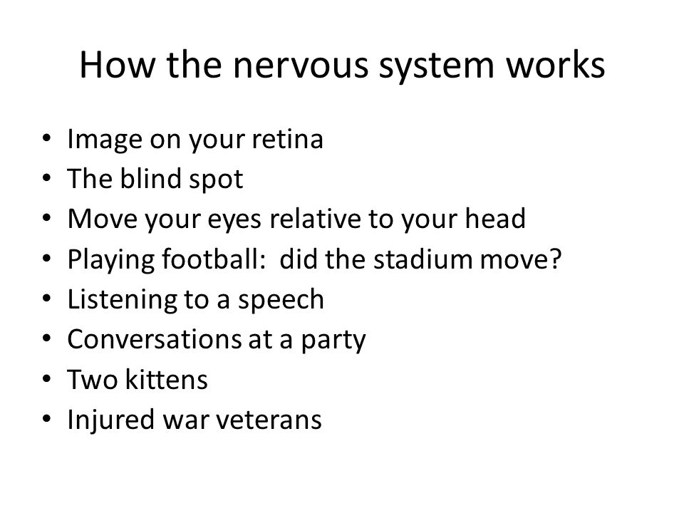 How the nervous system works Image on your retina The blind spot Move your eyes relative to your head Playing football: did the stadium move.