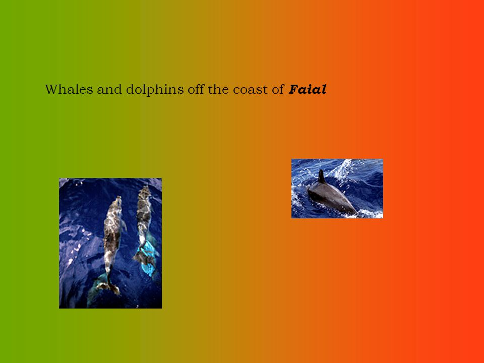 Whales and dolphins off the coast of Faial